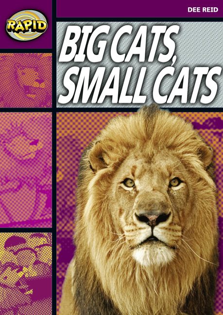 Rapid Stage 1 Set A: Big Cats, Small Cats (Series 1)