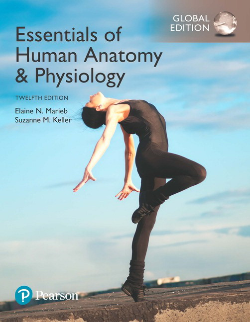 Essentials Of Human Anatomy Physiology Global Edition 12th