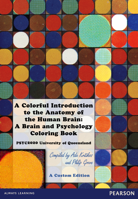 A Colorful Introduction To The Anatomy Of The Human Brain A Brain