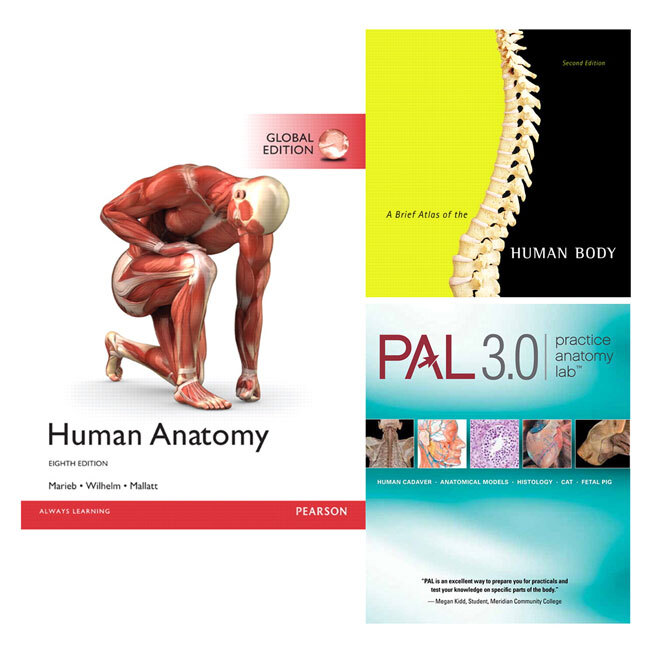 Human Anatomy Global Edition Practice Anatomy Lab 30 A Brief